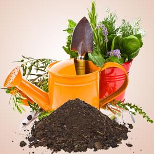 Garden Dirt