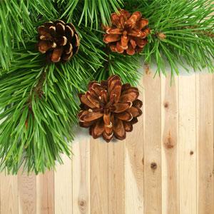 cedar wood fragrance oil