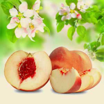 White Peach and Silk Blossoms