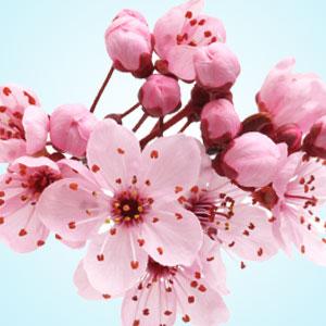 Image Result For Natures Garden